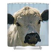 British White Cow Shower Curtain
