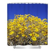 Brittlebush Shower Curtain