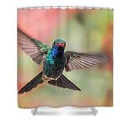 Broad-billed Shower Curtain