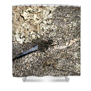 Broad Bodied Chaser Shower Curtain