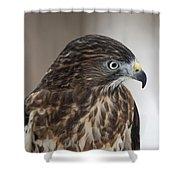 Broad-winged Hawk Shower Curtain