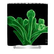 Broccoli, Esem Shower Curtain