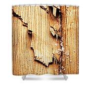 Broken Old Stump Spruce Shower Curtain