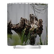 Broken Root Stump In Water  Shower Curtain
