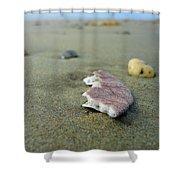 Broken Sand Dollar - Low Tide At Manhattan Beach Shower Curtain