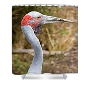 Brolga Profile Shower Curtain