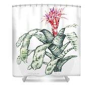 Bromeliad Aechmea Fasciata Shower Curtain