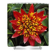 Bromeliad Blooming Shower Curtain