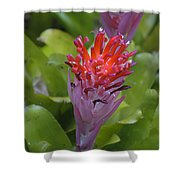 Bromeliad Flower Shower Curtain