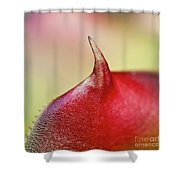 Bromeliad Shower Curtain