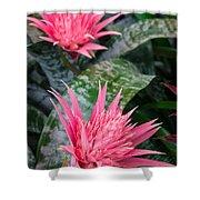 Bromeliad Plant 3 Shower Curtain