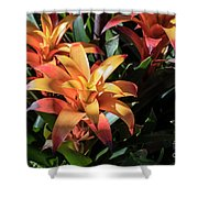 Bromeliads Shower Curtain