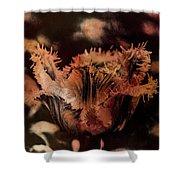 Bronze Tulip Shower Curtain by Richard Ricci