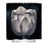 Brooding Virtue Shower Curtain
