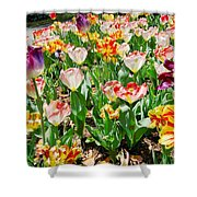 Brookgreen Gardens Tulips Shower Curtain