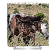Broomtails Shower Curtain