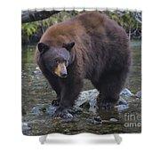 Brother Bear Shower Curtain