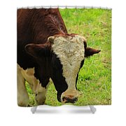 Brown And White Bull On A Farm Shower Curtain