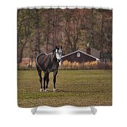 Brown And White Horse Shower Curtain