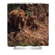 Brown Bear Watches From Steep Rocky Outcrop Shower Curtain