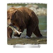 Brown Bear With Salmon Shower Curtain