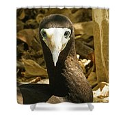 Brown Booby Shower Curtain