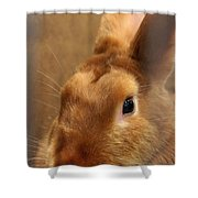 Brown Bunny And Whisker's Closeup Shower Curtain