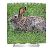 Brown Bunny In Grass Shower Curtain