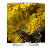Brown Butterfly On Yellow Daisies  Shower Curtain