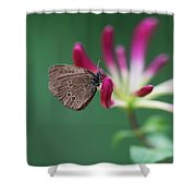 Brown Butterfly Resting On The Pink Plant Shower Curtain