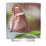 Brown Butterfly Shower Curtain