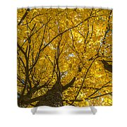 Brown County Colors Shower Curtain