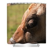 Brown Cow With Vignette Shower Curtain