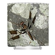 Brown Dragonfly  Shower Curtain