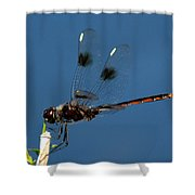 Brown Dragonfly Hanging On Shower Curtain