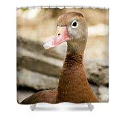 Brown Duck Portrait Shower Curtain