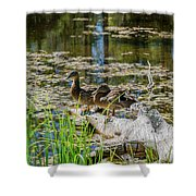 Brown Ducks On Log Shower Curtain
