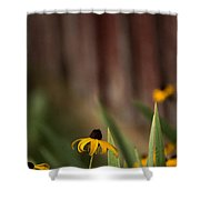Brown Eed Susans By Red Bard Shower Curtain