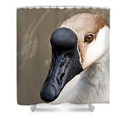 Brown Eye Shower Curtain