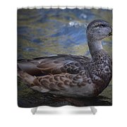 Brown Feathered Girl Shower Curtain