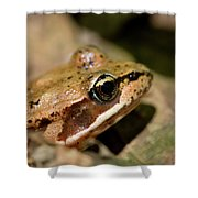 Brown Frog In The Forest - Western Oregon Shower Curtain