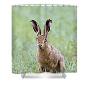 Brown Hare Shower Curtain