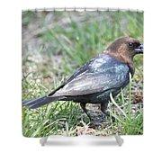 Brown-headed Cowbird 2 Shower Curtain