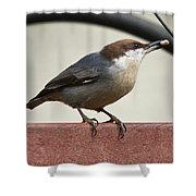 Brown-headed Nuthatch Shower Curtain