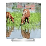 Brown Horse And Foal Nature Spring Scene Shower Curtain