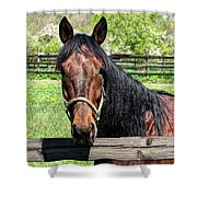 Brown Horse In A Corral Shower Curtain