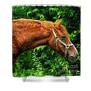 Brown Horse In High Definition Shower Curtain