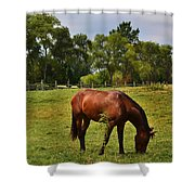 Brown Horse In Holland Shower Curtain