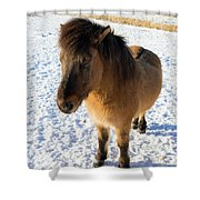 Brown Icelandic Horse In Winter In Iceland Shower Curtain