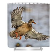 Brown Mallard Landing Shower Curtain